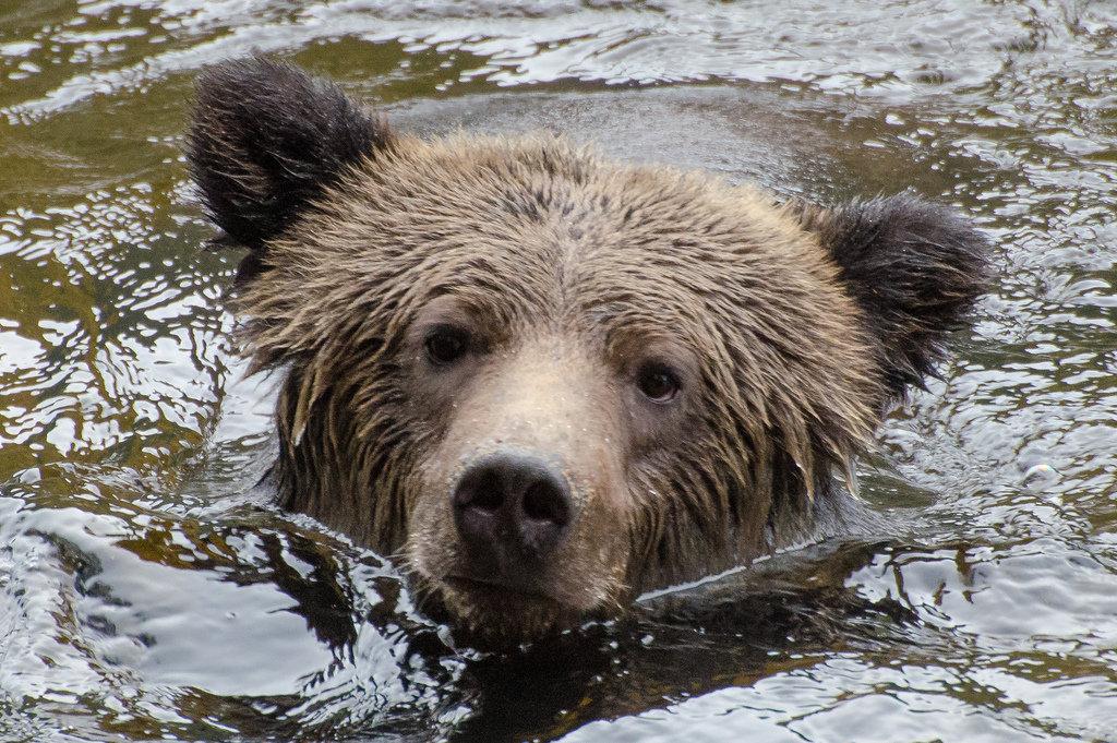 произрастает фотографии животных северной америки индивиды упорно