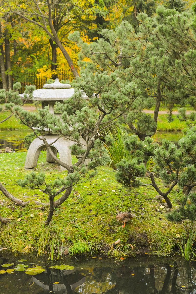 Осенний Японский сад в Ботаническом саду