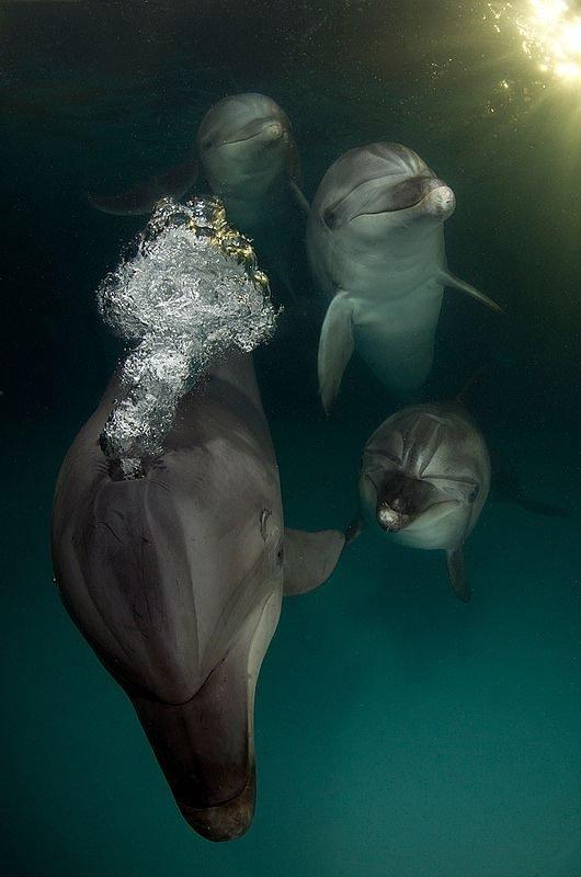Удивительные животные. Фото.