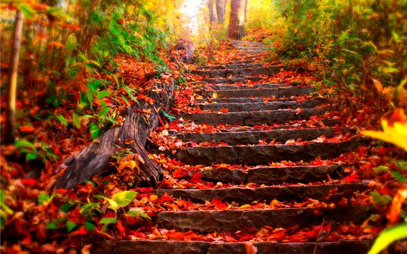 Осенние листья на каменной лестнице