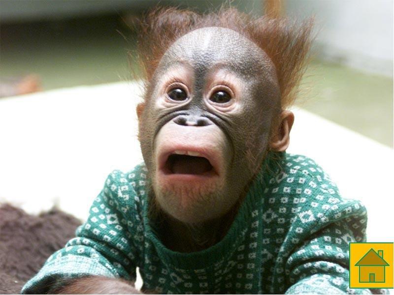 открытки удивленная обезьяна