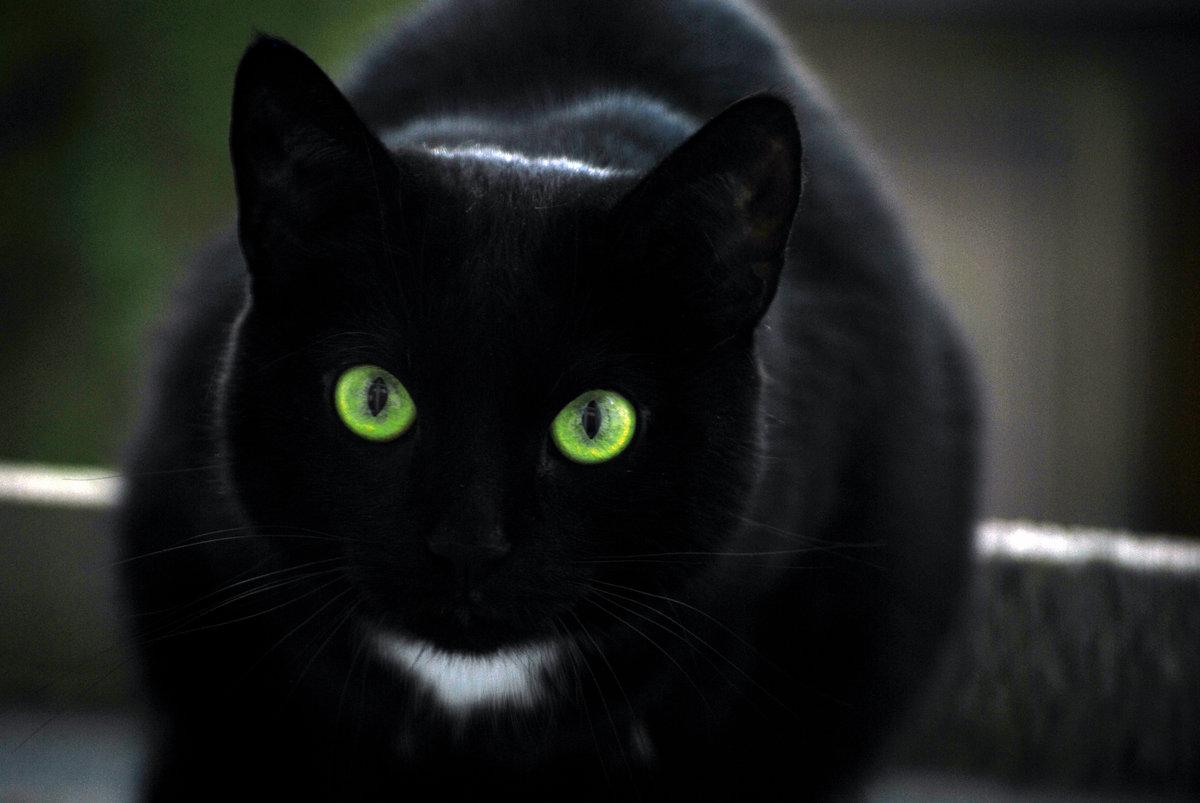 Картинки черные кошки с зелеными глазами, поздравлению юбилеем