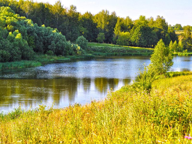 река, лес