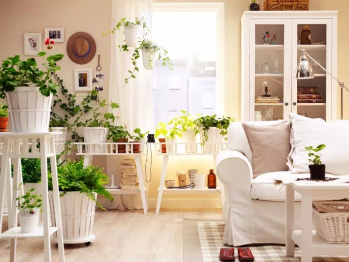В гостиной украсят собой интерьер крупные напольные растения или подвесные ампельные.