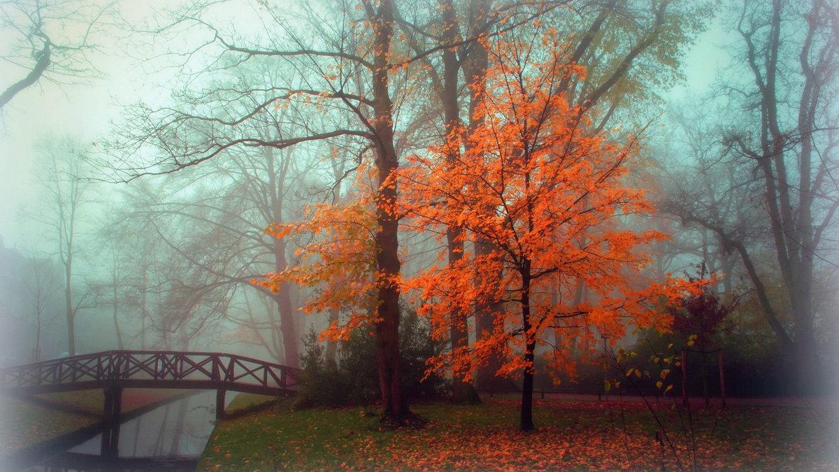 Осенний туман над мостиком