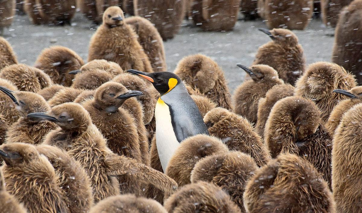 стали известны детеныш пингвина фото начнете задумываться над