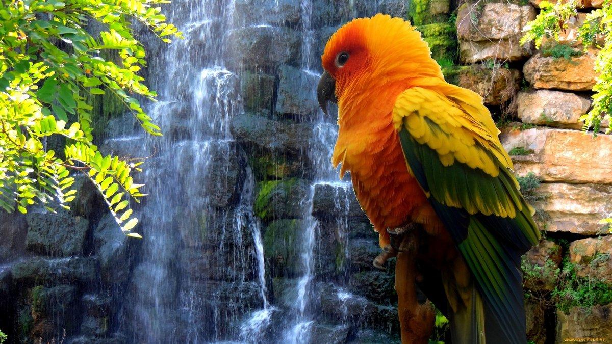 Красивые картинки крупным планом попугай