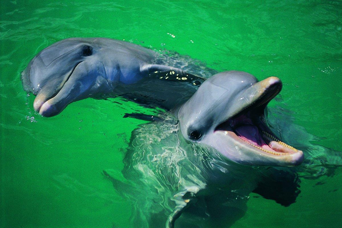 Картинка смешных дельфинов