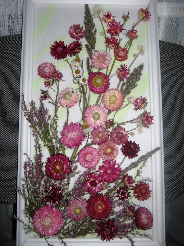 цветы комнатные фото с названиями и уход драцена