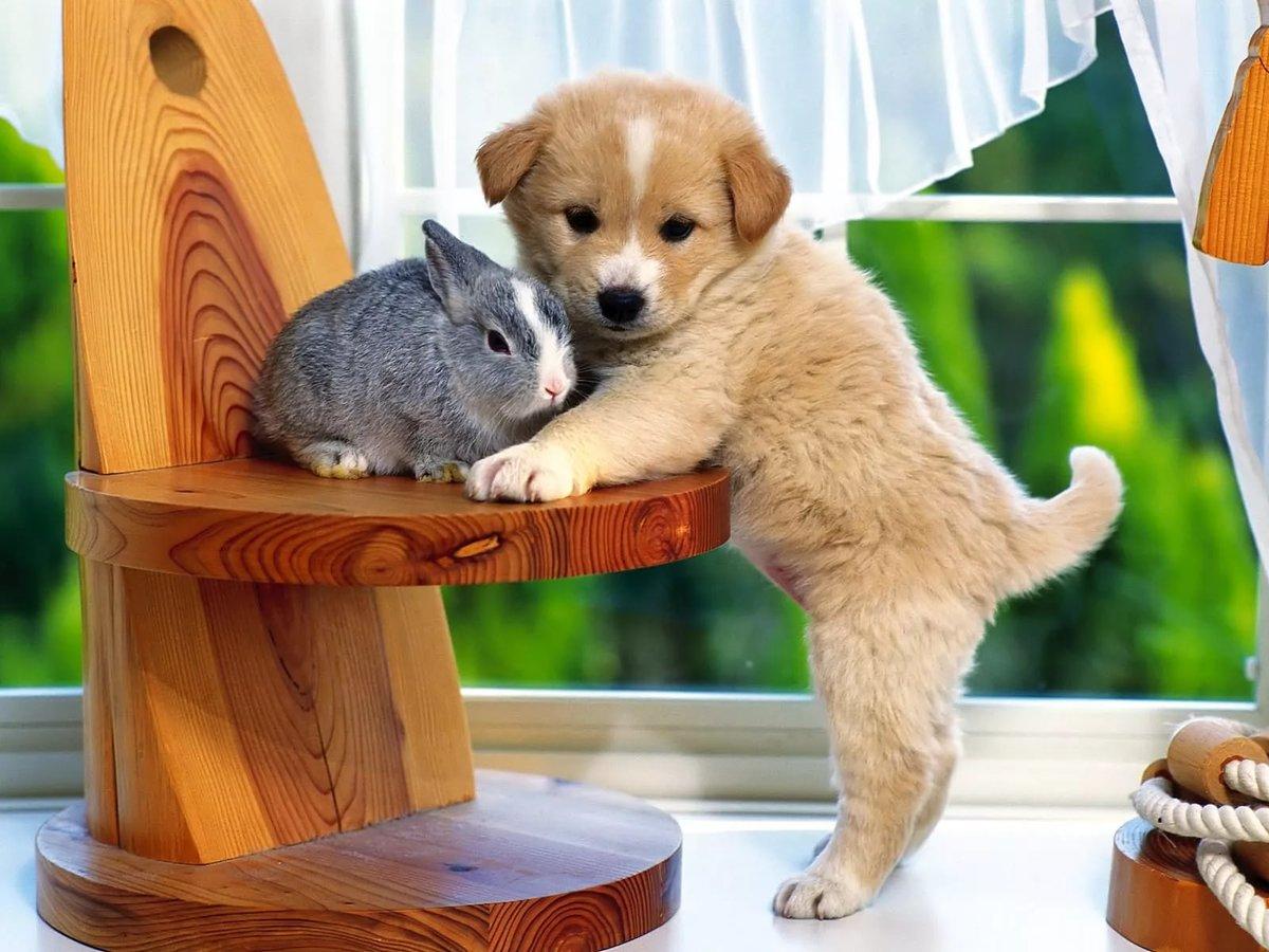 Маленький щенок и  кролик