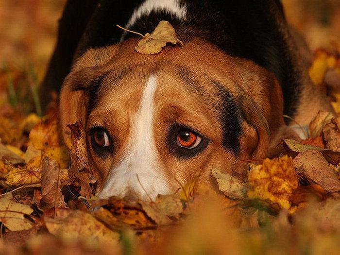 Картинки грустное настроение осень