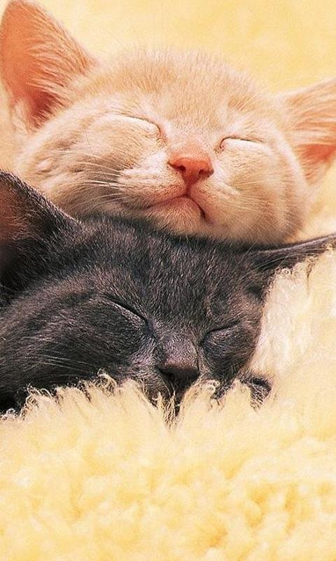 плохого могу картинки котик дорогой любимый хочу
