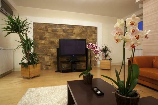 Воздух в комнате с большим количеством цветов должен быть несколько более насыщен влагой, поэтому для здоровья людей и растений имеет смысл приобрести увлажнитель