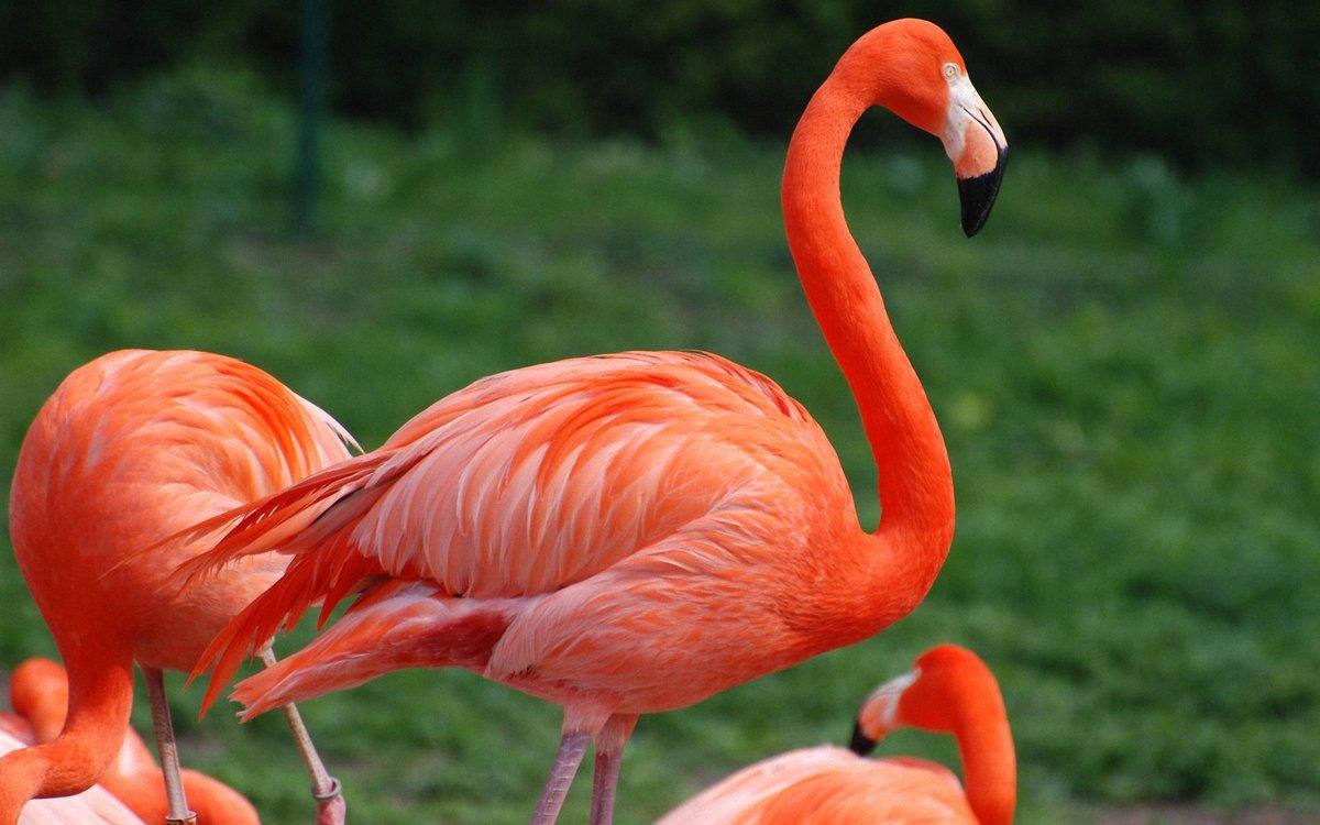 картинки редких животных занесенные в красную дома двумя спальнями