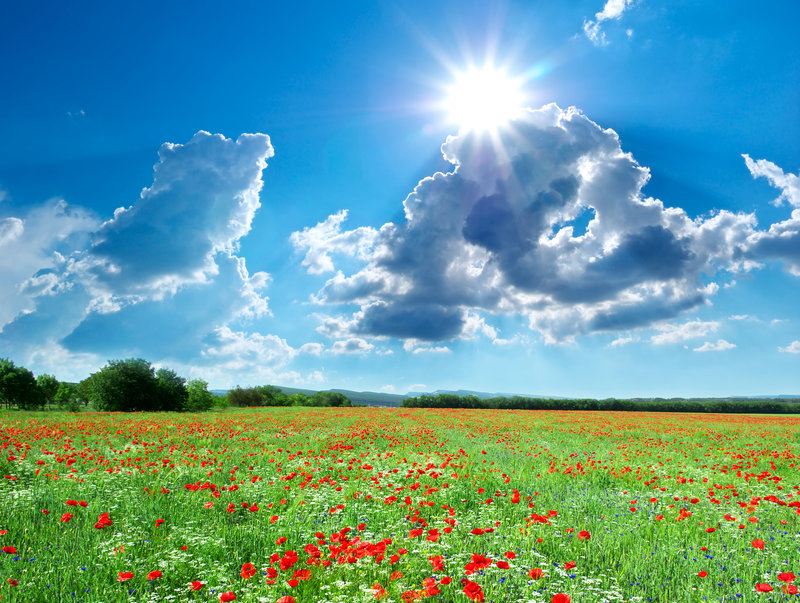 Фотографии Лето Солнце Природа Маки Поля Небо Пейзаж 3000x2262 3000 x 2262