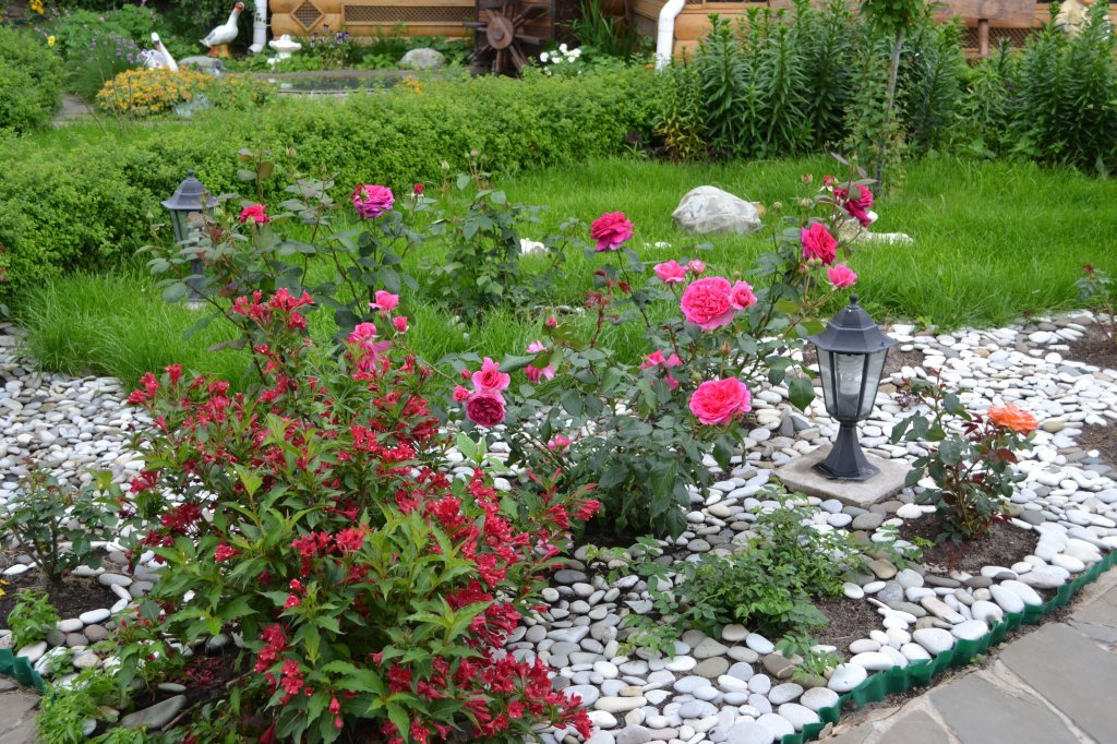 клумбы с розами оформление фото