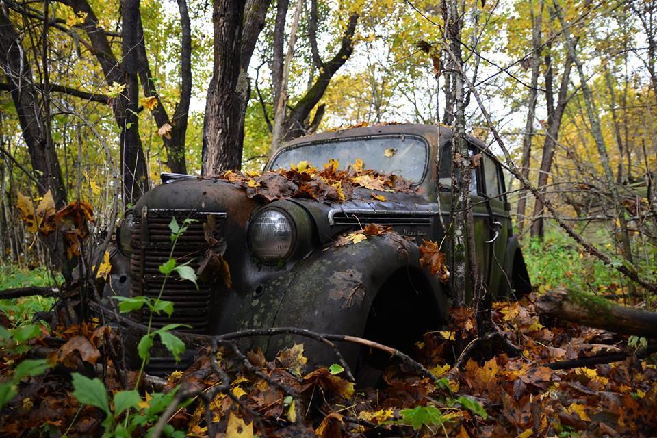 Фото брошенных автомобилей в лесу