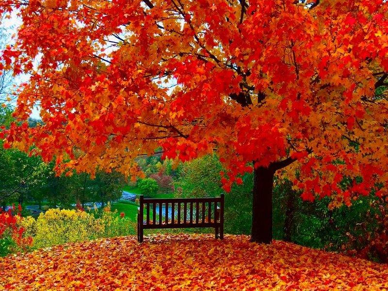 яркий листопад