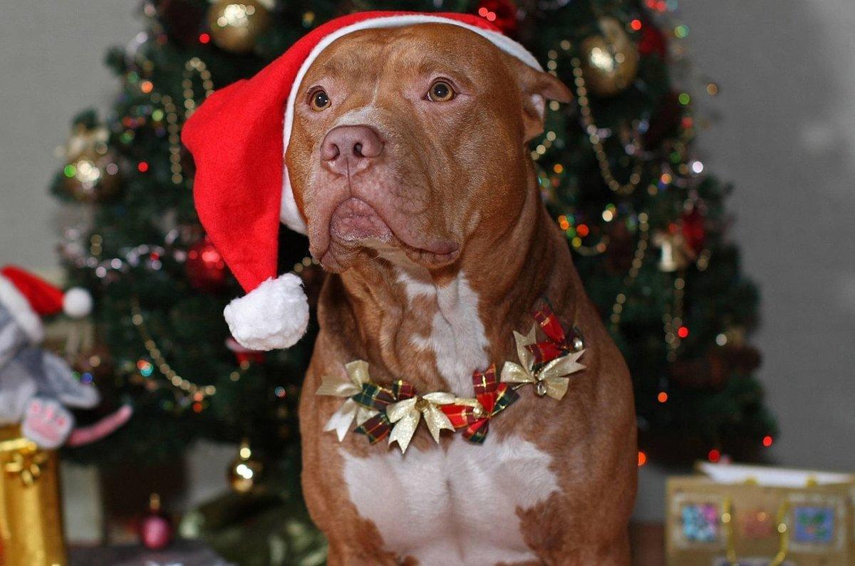 Смешные картинки животных с новым годом, бракосочетанием картинки красивые