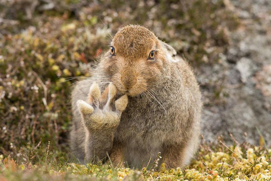 Прикольные картинки природа и животные, труда картинки прикольные