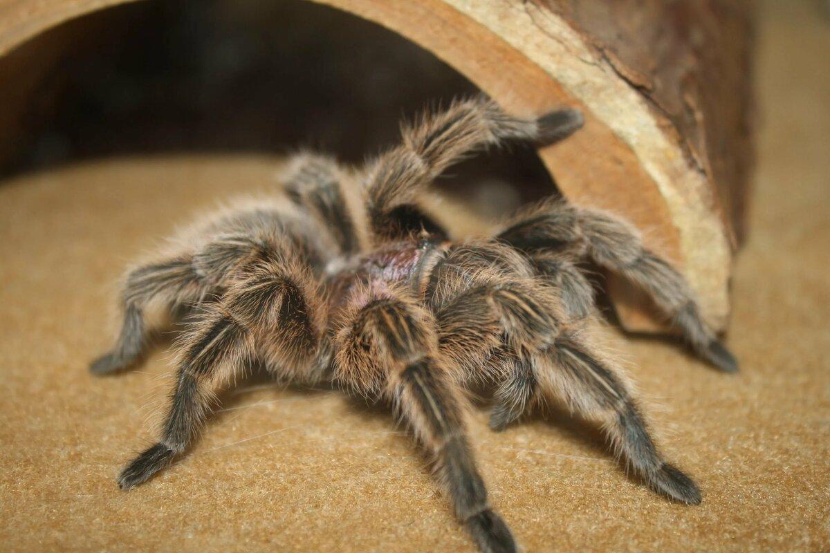неудачных фото самца тарантула признался, что рождение