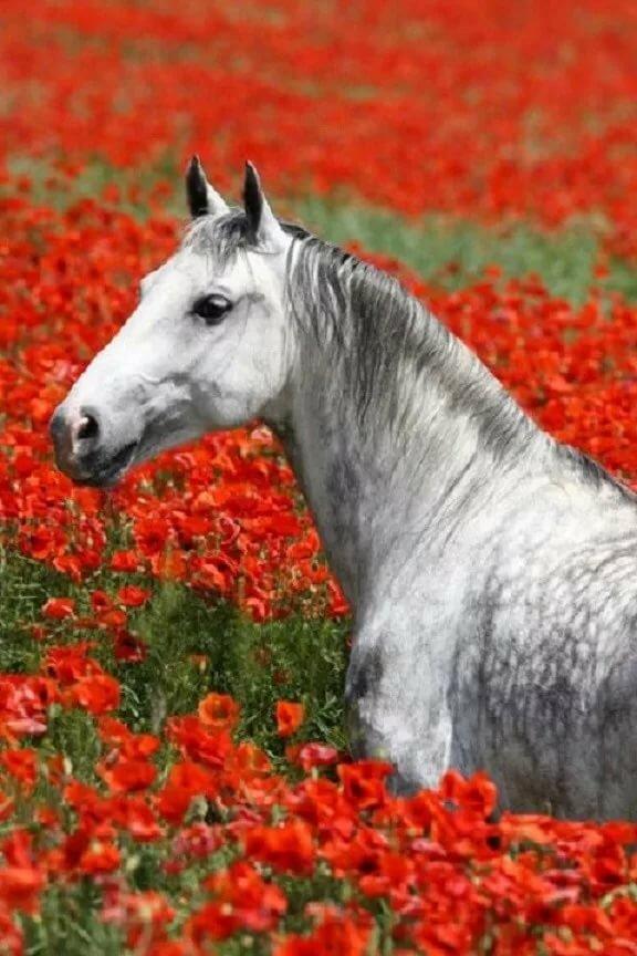 лошади в картинках розы