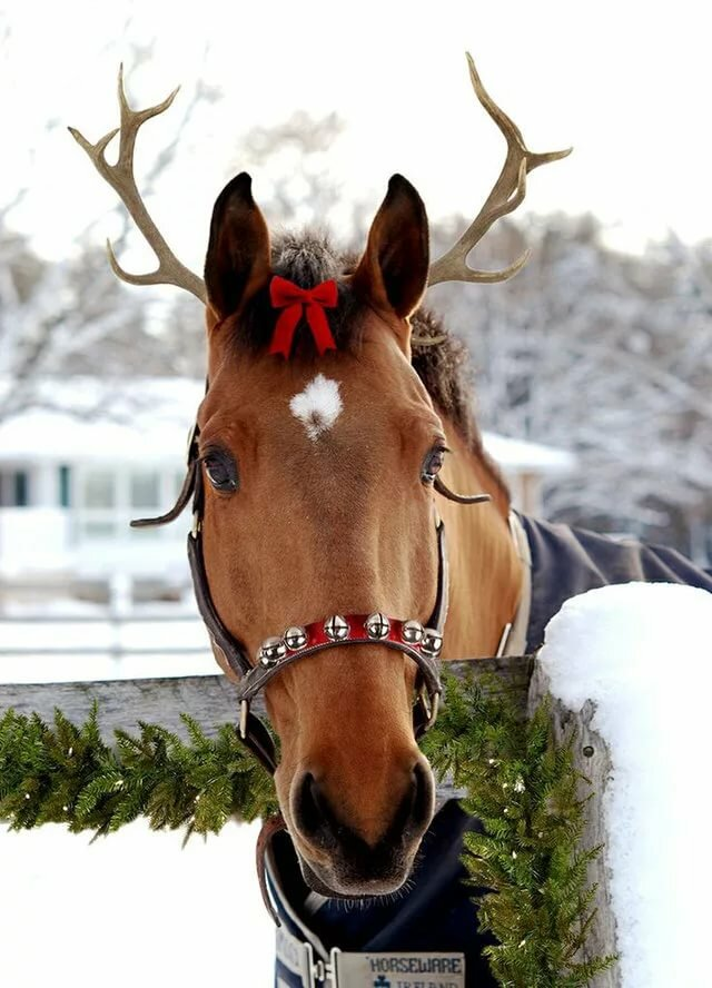 Картинка новогодний конь
