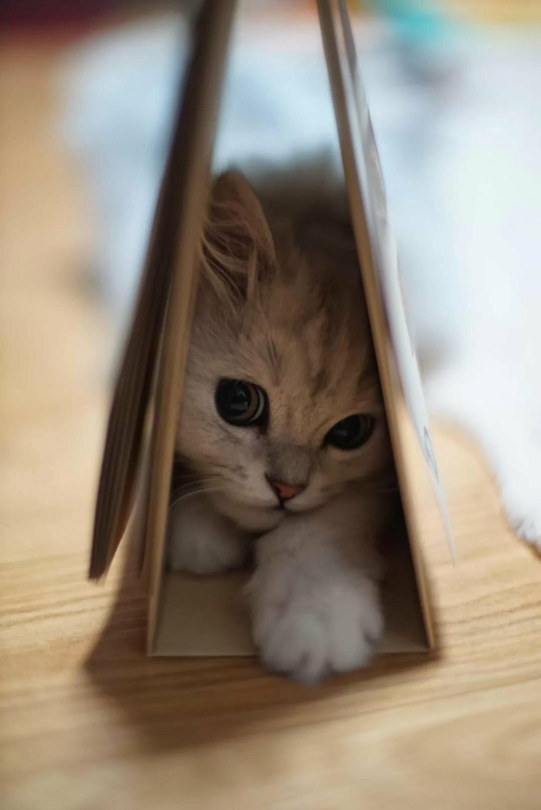 sweet little kitty by Chunsoo Son- Joe Monster.org
