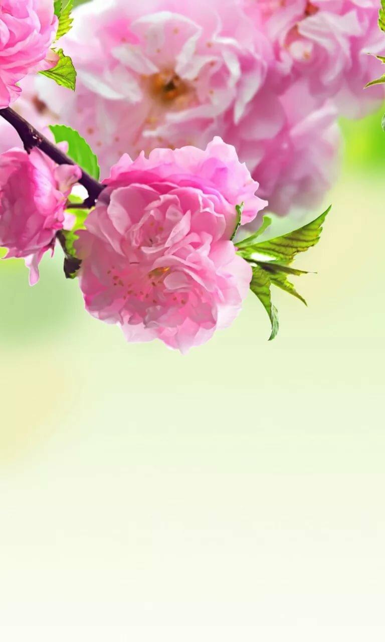 цветы по вертикали картинка плитки ламината полу