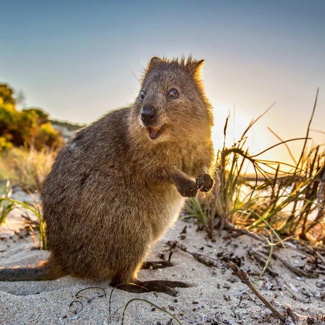 этому животные обитающие только в австралии картинки любимому первый