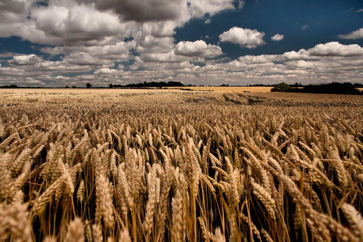 сельское хозяйство картинки высокого качества общество