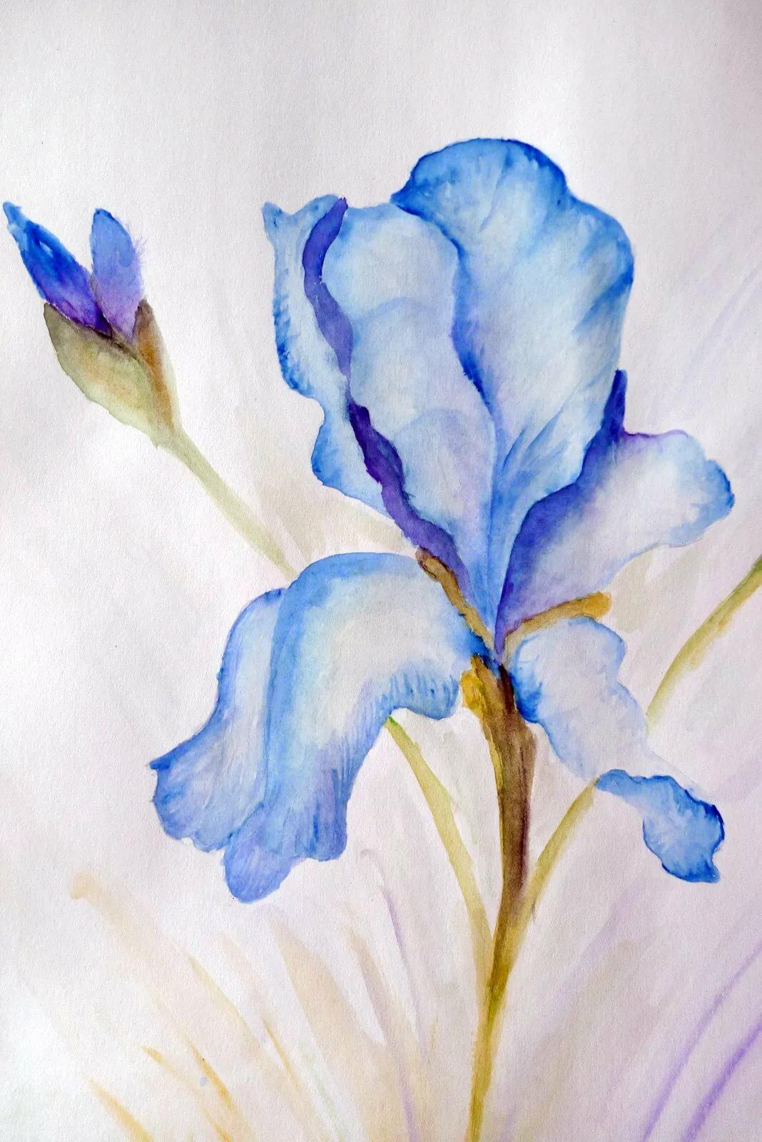 умение рисуем цветы акварелью картинки основана