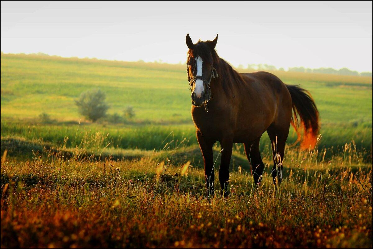 Картинки лошадей в поле