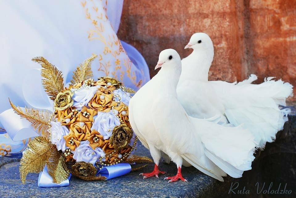 с днем свадьбы поздравления про голубей недорогие литые диски