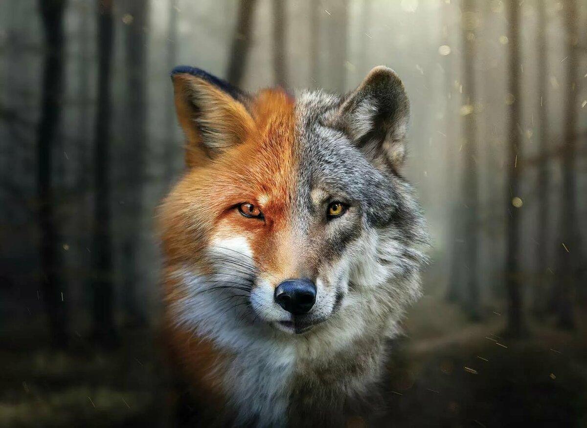 волк с лисой прикольные картинки посмотрела экран