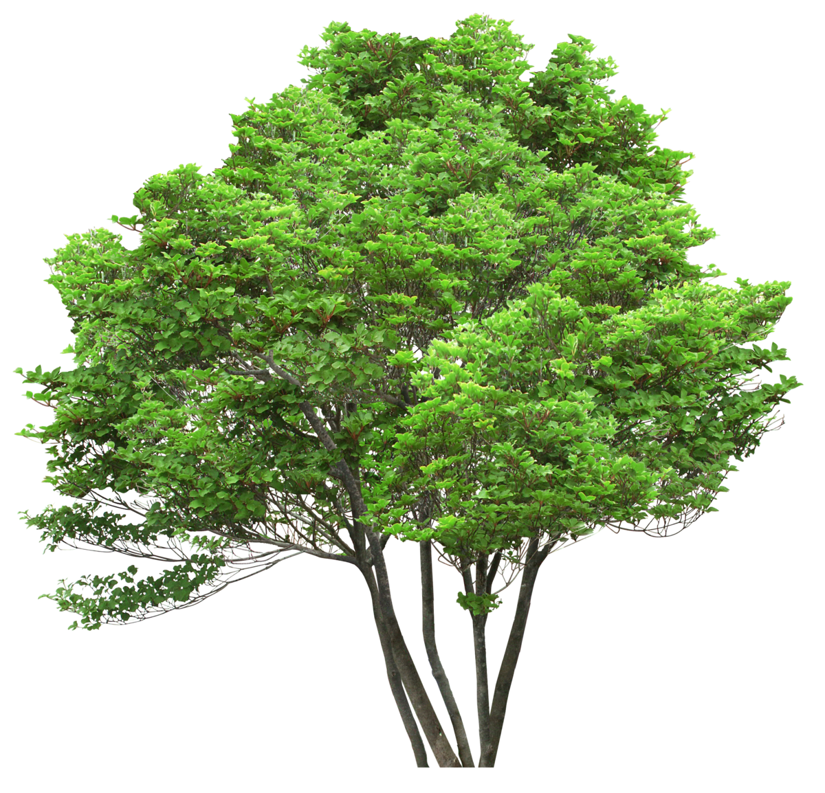 Гиф картинка деревья