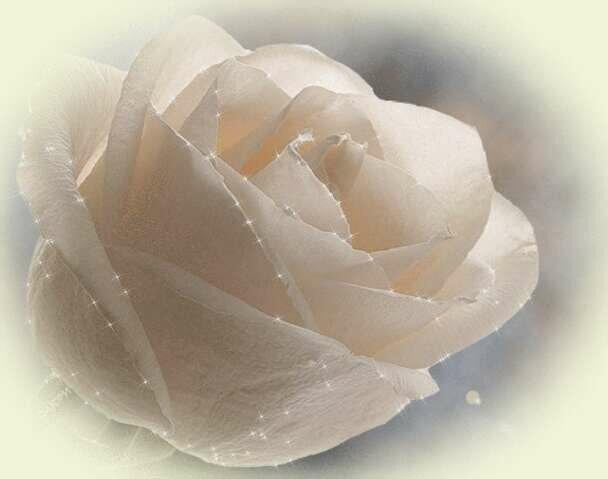 Картинки анимации розы белые