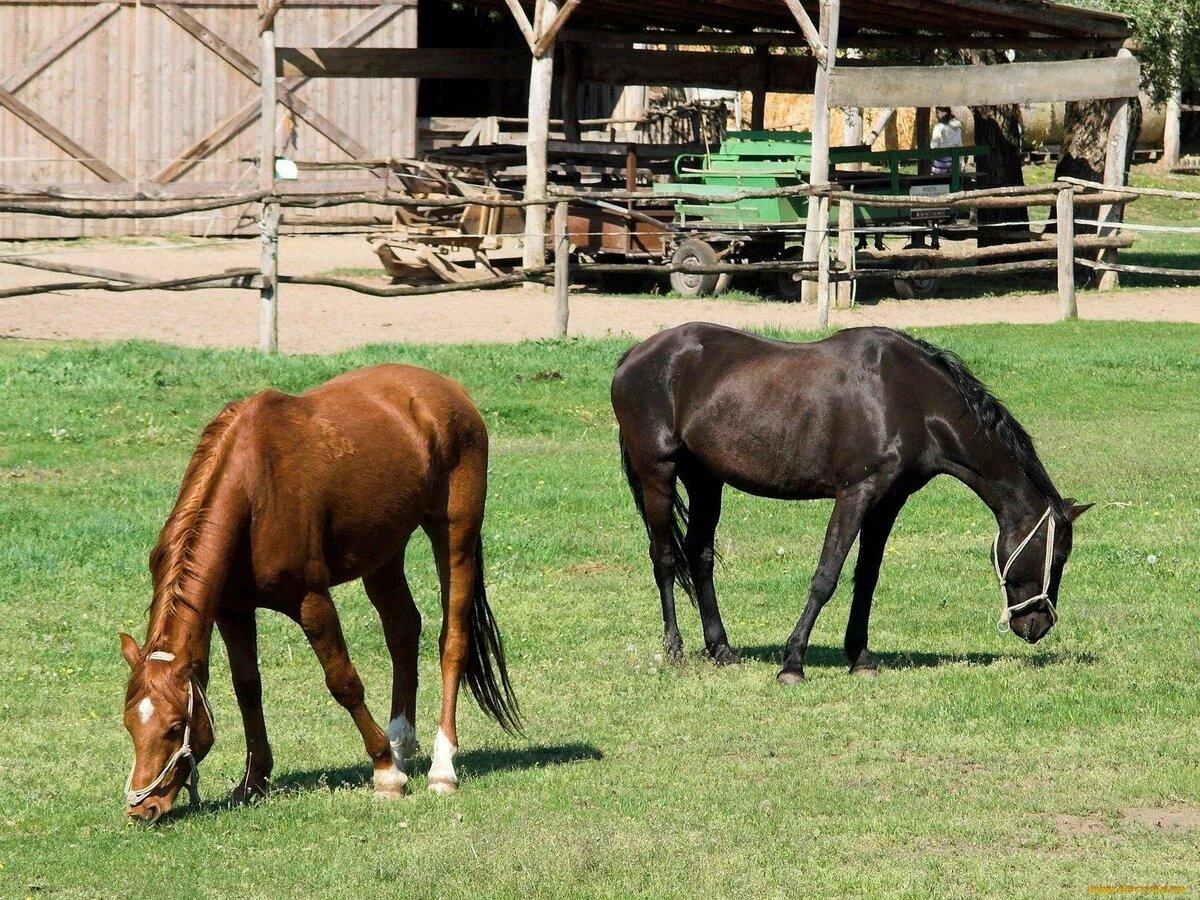 Лошади домашние картинки