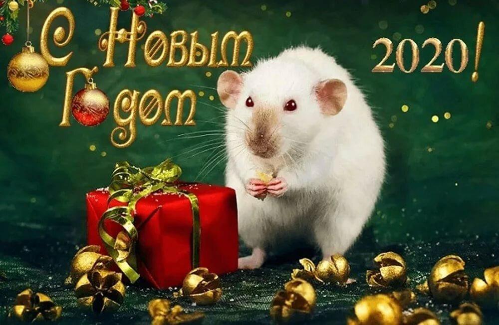 Открытки для поздравления с Новым годом Крысы 2020 Домашняя