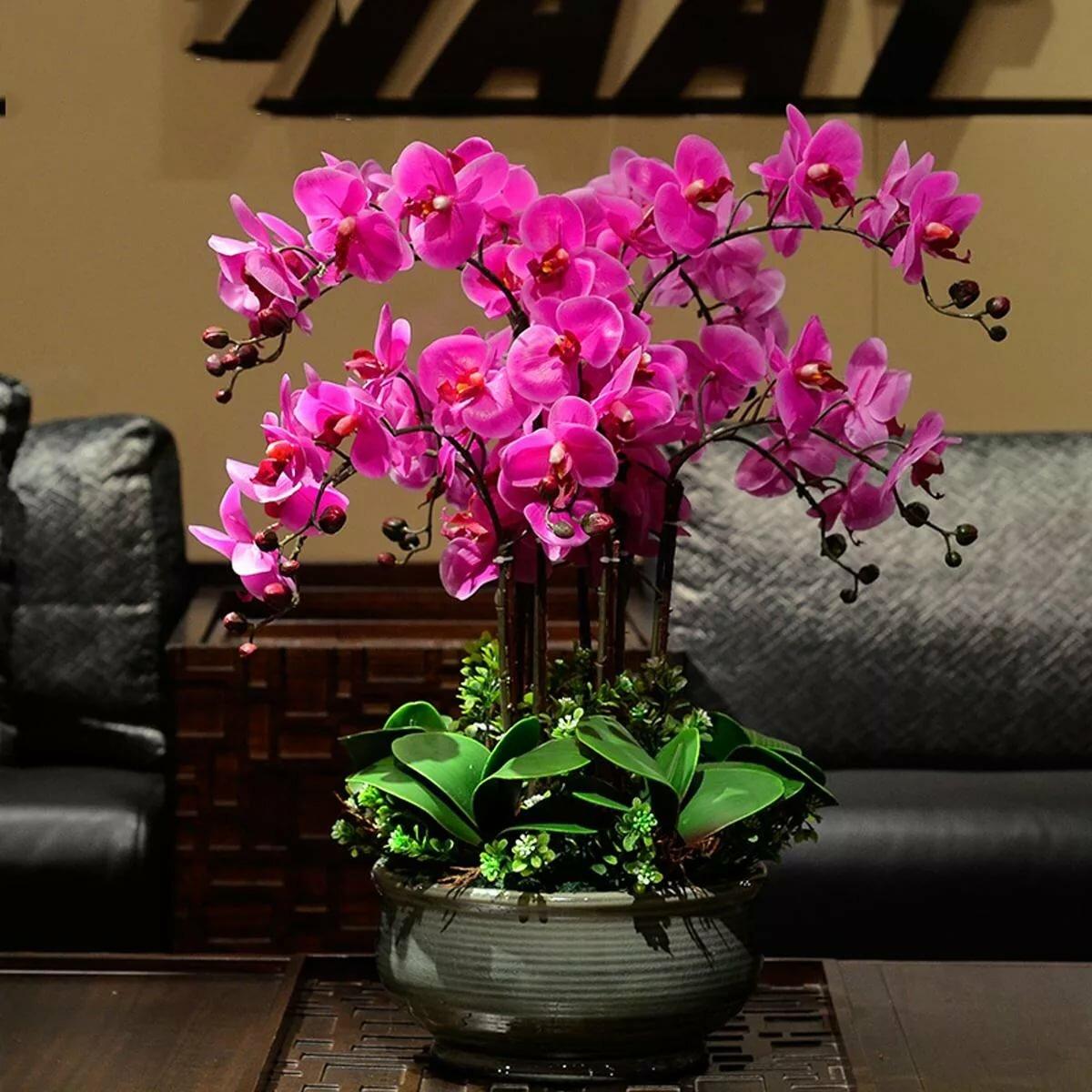 орхидеи фото красивые картинки в горшках слеза слона пользуется