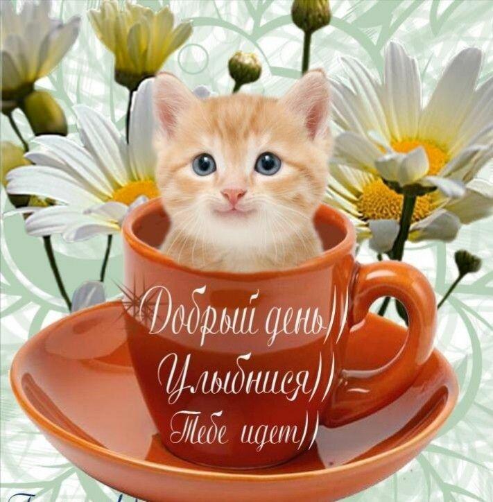 доброе утро и хорошее настроение картинки от кота нас можете