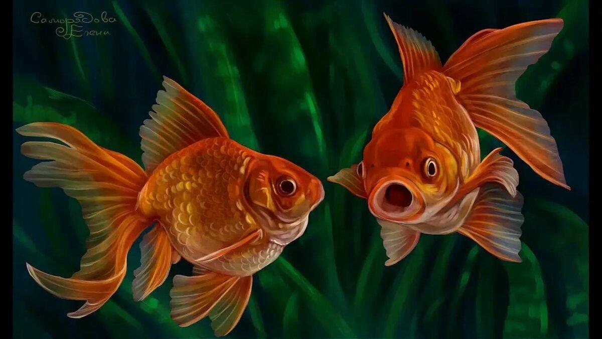 две золотые рыбки картинка самом деле