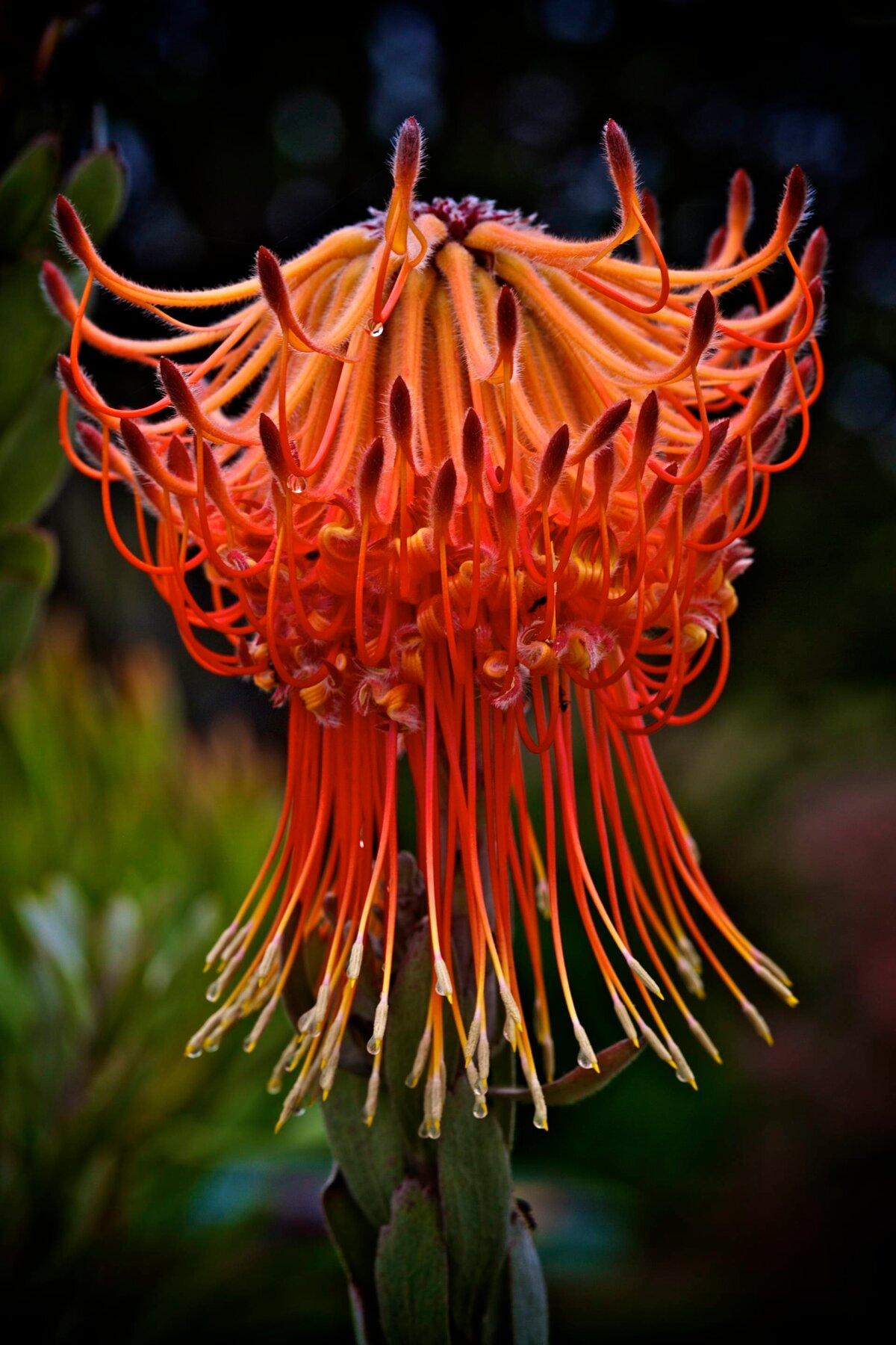 фотографии редких цветов лучше установить