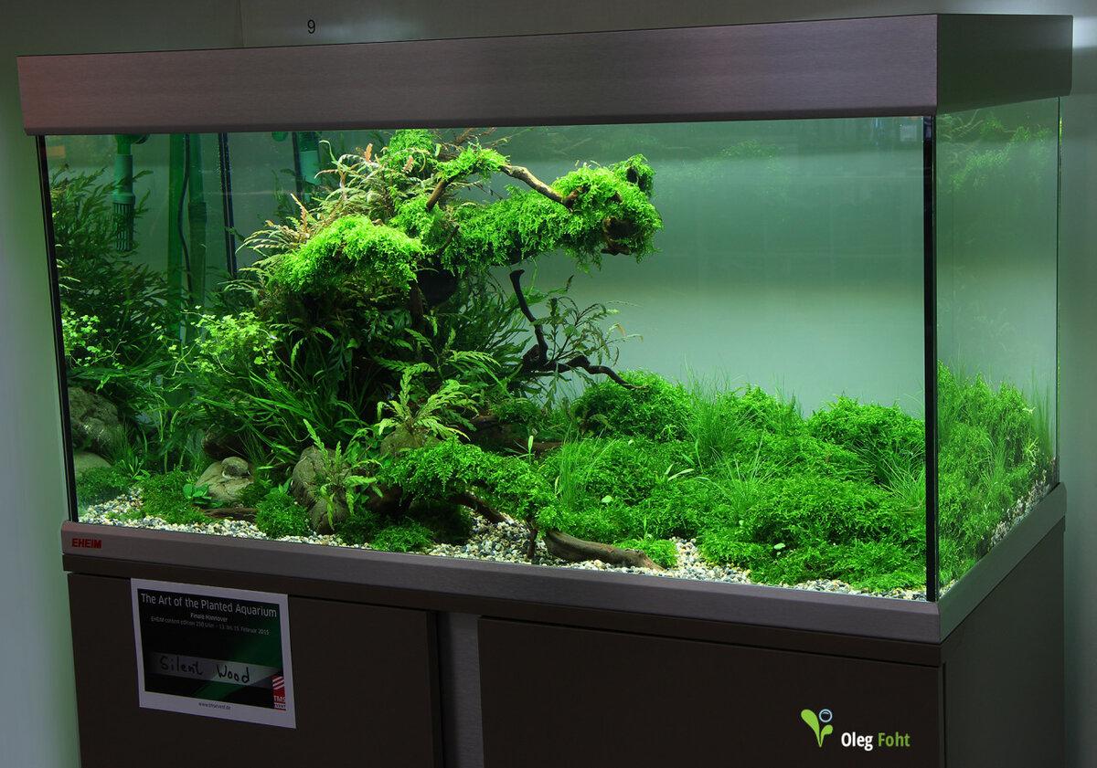 года, фото оформления аквариумов с живыми растениями всего избытке, живописных