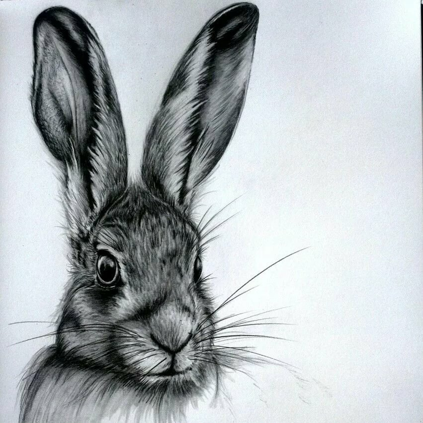картинки зайца простым карандашом