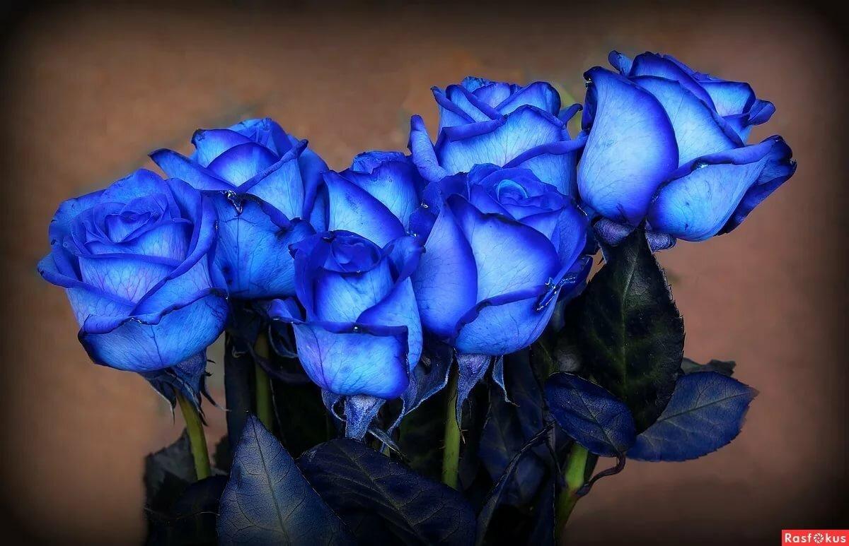 Голубые и синие розы картинки