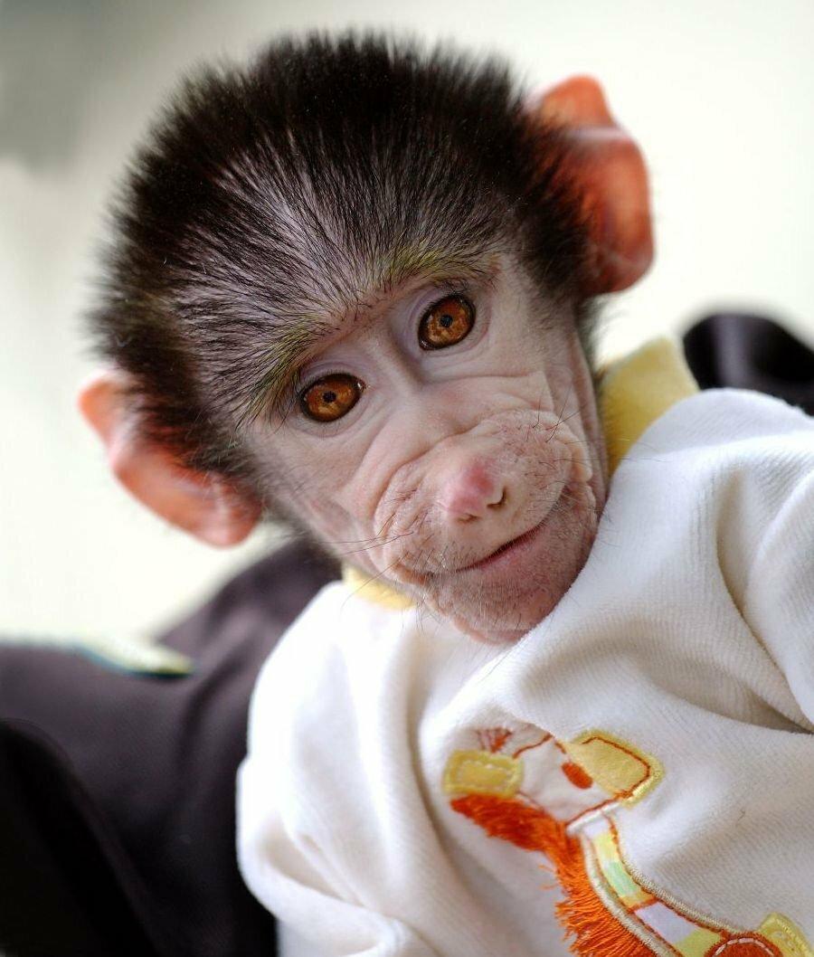 картинка обезьянка в мире деревня