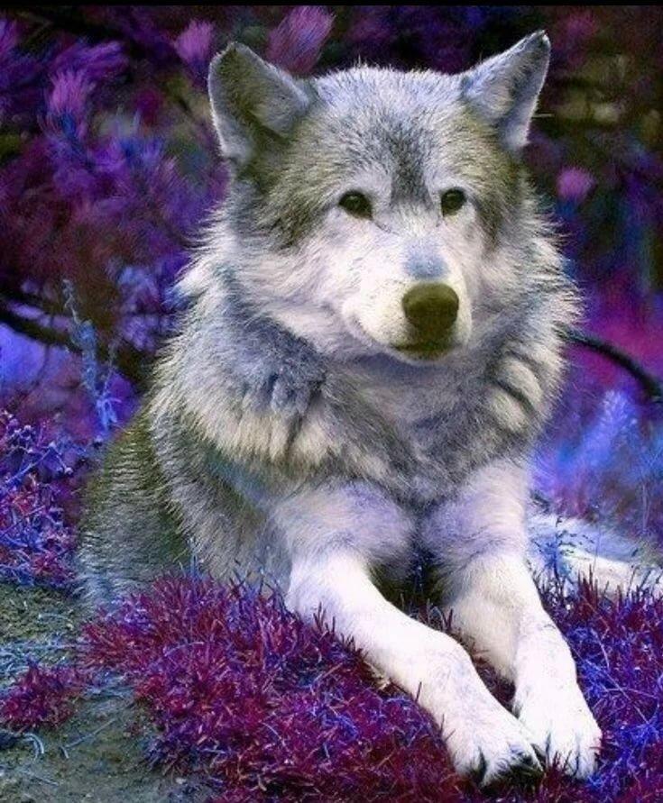 сочетает себе милые картинки с волками зайка подрастал