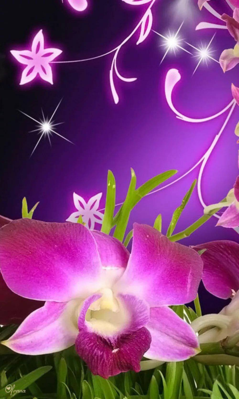 картинки на дисплей телефона цветы показанный фильм очень