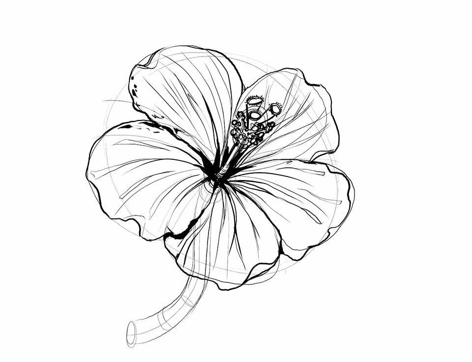 важно гибискус цветок рисунок графика своей